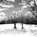 枯れ木黒サムネ