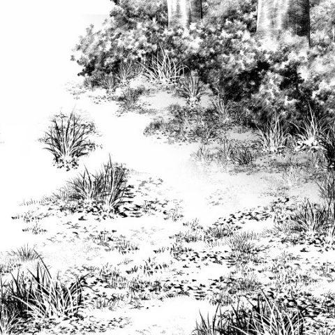 草地面黒サムネ