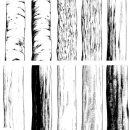 幹枝根10種サムネ