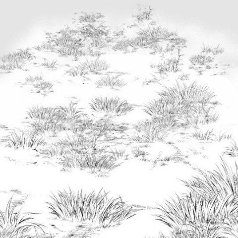 草地面白サムネ