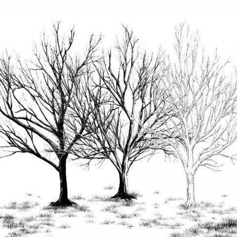 枯れ木3種サムネ