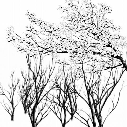 枝ブラシ黒サムネ