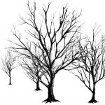 _thumbnail-dead-tree-black