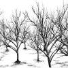 _thumbnail-dead-tree-black-wt-white