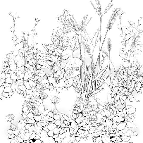 野草7種セットサムネ